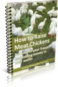 Raise Meat Chickens