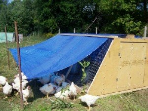 New Terra Farm Movable Coop