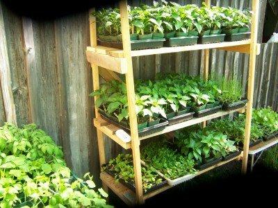 backyard nursery plant stand