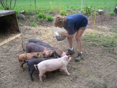 Our piggies live in the garden