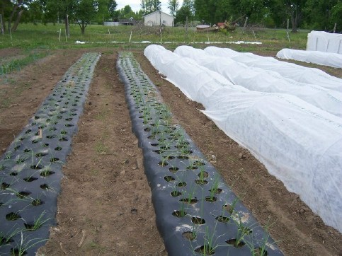 Floating Row Cover Is The Organic Gardener S Best Friend
