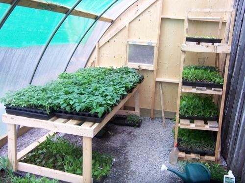 Start A Backyard Nursery Business