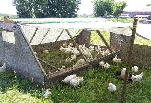 The New Terra Farm Movable Coop