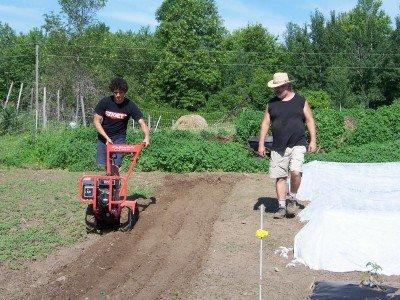 Market gardening at New Terra Farm