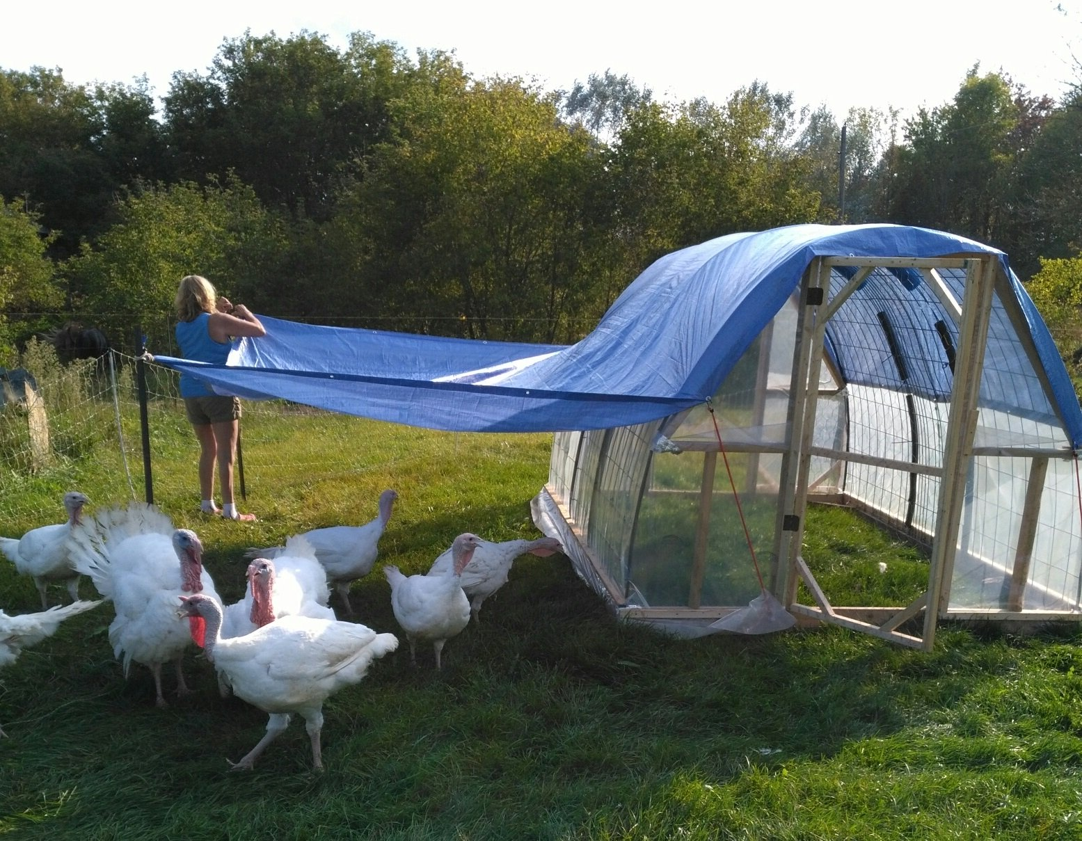 portable chicken coop picture